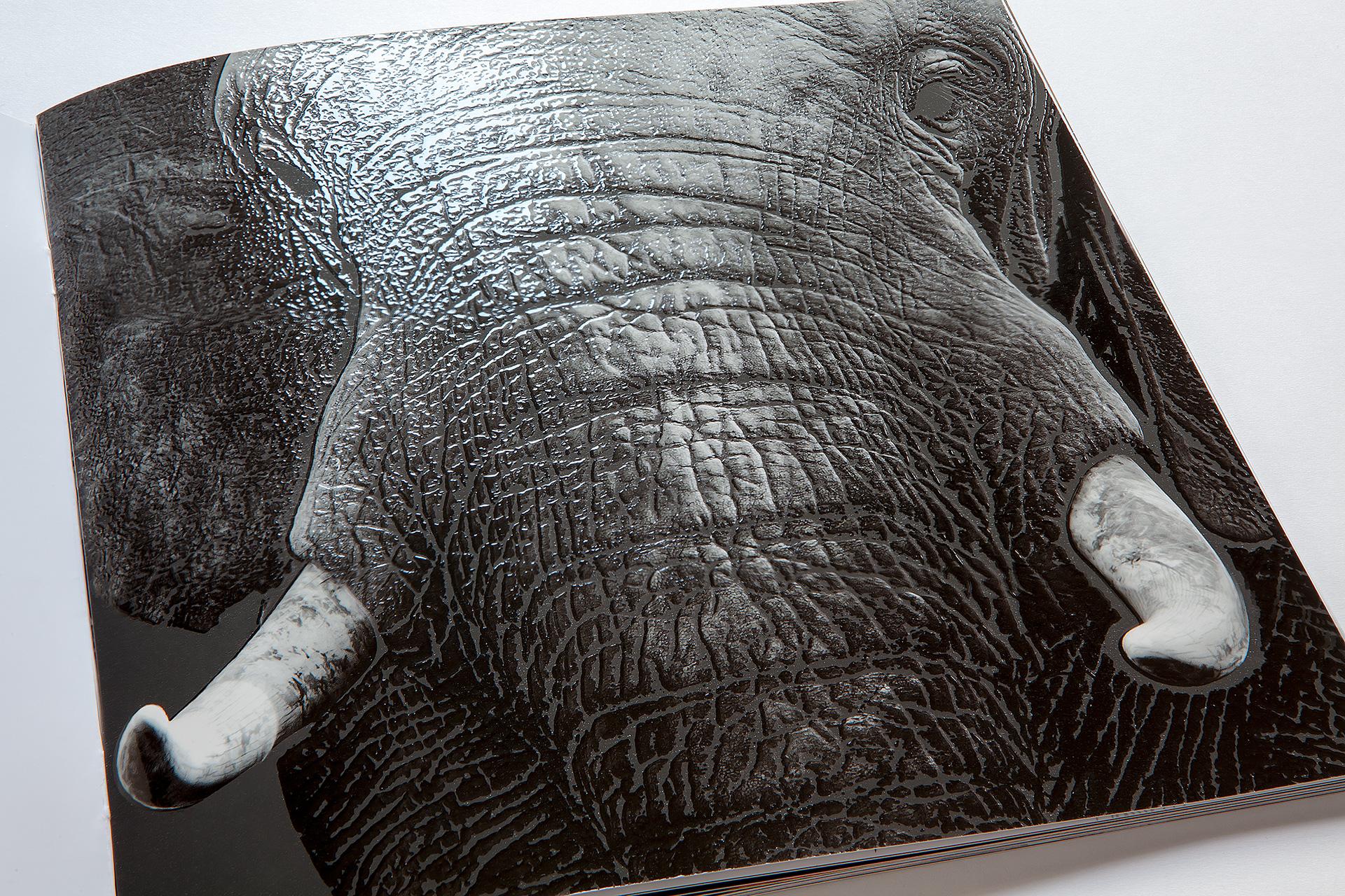 Fotomotiv mit 3D-Lackierung - Druckveredelung
